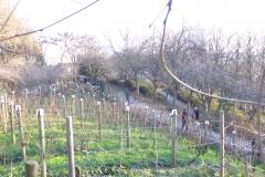 vigne belleville