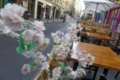 sakura-rue-sainte-anne